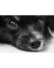 Twój czas - Twój pies