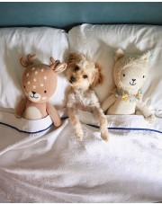 Luksusowy hotel zaprasza zwierzęta ze schroniska na pobyt z opcją adopcji!